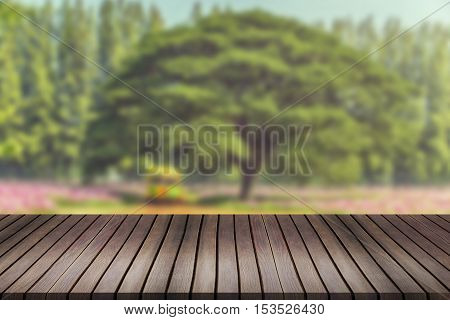Empty Space Of Green Forest And Sunset.can Be Used For Display Or Montage Your Products.