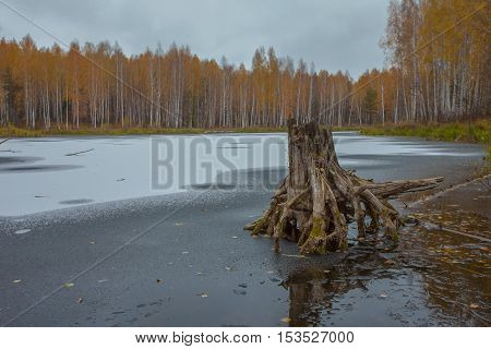 frozen lake in the middle of autumn forest