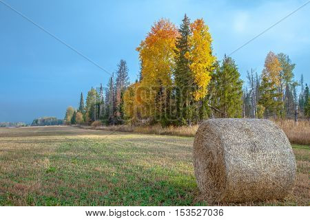 closeup of a folded stack of hay in autumn in a field next to the forest