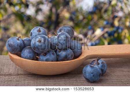 blackthorn berries in a wooden spoon on table with blurred background.