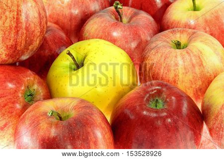 picture one ripe yellow apple with red apples