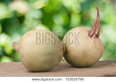 Two watermelon radish on a wooden table with blurred garden background.