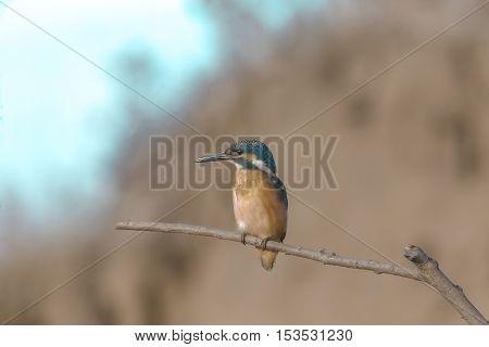Bird With Bright Colorful Plumage Sitting On A Branch