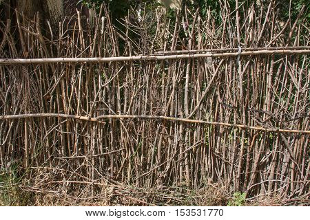 rustic woven branches fence as a background.