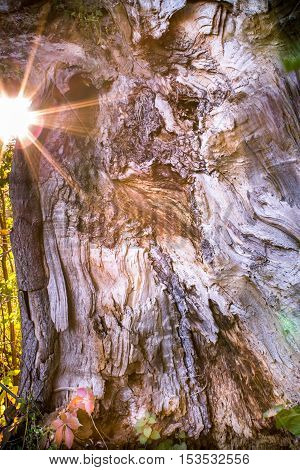 Close up of a big tree trunk with sun shining on the side