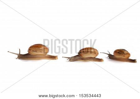 Three snails are walking orderly rows on a white background.