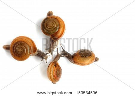Four Snails are meetings on white background