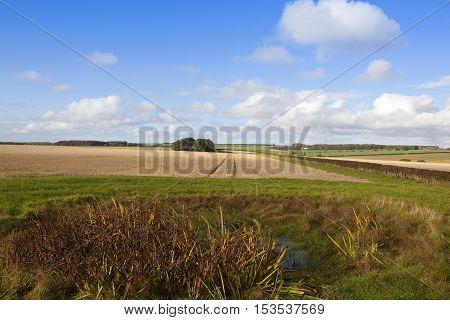 Agricultural Dew Pond