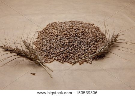 A close up image of a pile of wheat grains with wheat stalks.