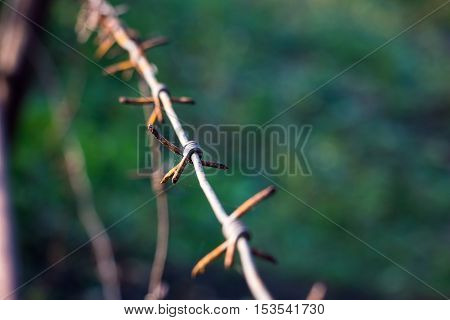 Barbed wire on blurred background. Green field for protection background