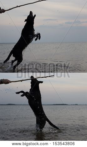 dog playing with it's host on the beach