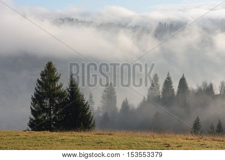 Autumn landscape with fog and spruce forest in the mountains. Overcast weather. Carpathians, Ukraine, Europe