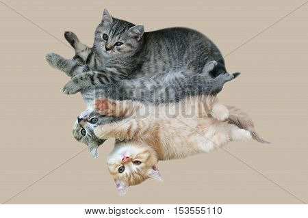 Kittens striped color. Kids cat playing. Favorite Pets on isolated background.