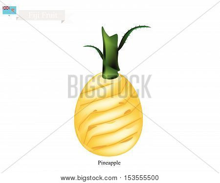 Fiji Fruit Illustration of Pineapple. One of The Most Popular Fruits in Fiji.