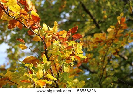 Bright yellow branch of autumn tree glowing in sunlight