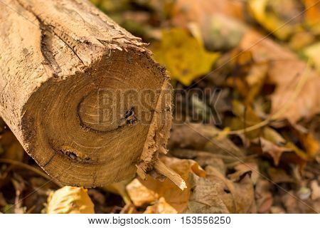 interesting wood texturecan be used as a backgroundthis is the world of nature