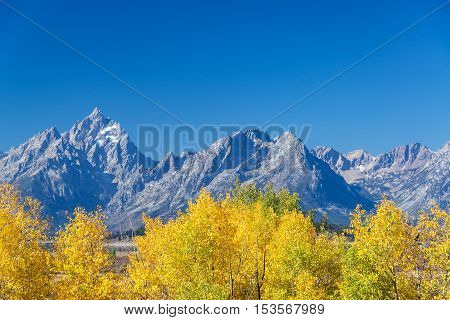 Aspen Trees And Teton Range