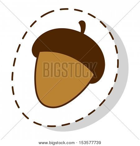 Dried acorns flat vector illustration.