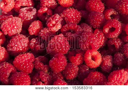Edible background of ripe delicious red raspberries