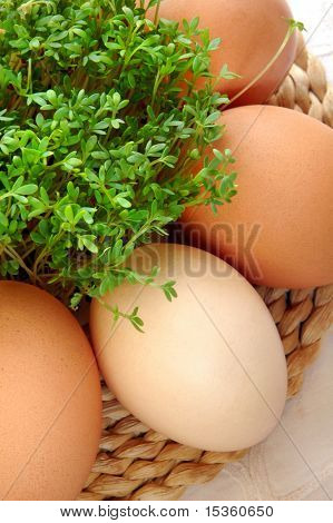 Natural eggs and fresh watercress, close-up