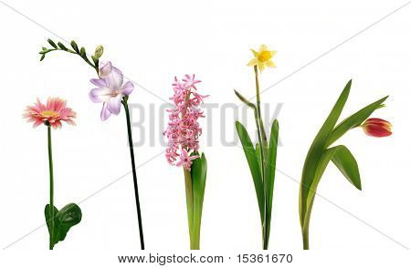 Various single spring flowers