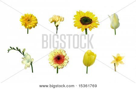 Various single yellow flowers, isolated
