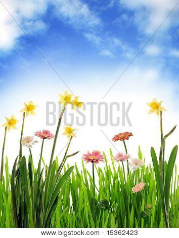 Garden scenery with blue sky
