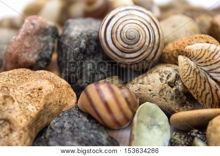 Sea Theme, Seashells And Stones - Background