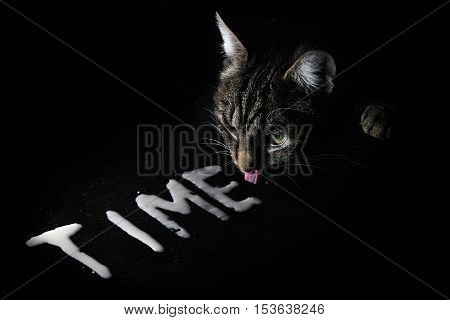 cat licking cream which is shaped in the word TIME on a black slate plate concept for time goes by like milk which is licked by a cat copy space in the dark background