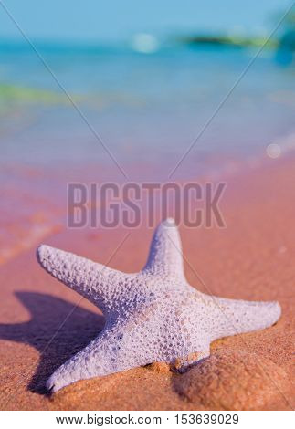 Starfish Stranded on a Beach