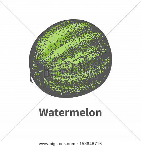 Vector illustration doodle sketch hand-drawn single ripe juicy green watermelon. Isolated on white background. The concept of harvesting. Vintage retro style.