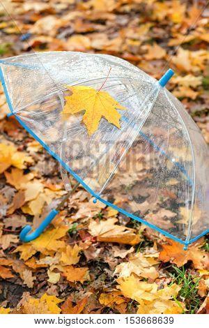 transparent umbrella on golden autumn foliage