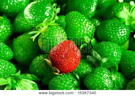 Strawberries mutant. Abnormal green strawberries and only one red.
