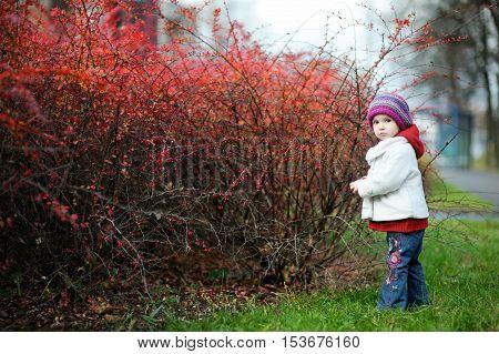 Adorable Toddler In An Autumn Park