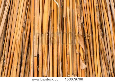 background of dried reeds closeup  primitive decoration