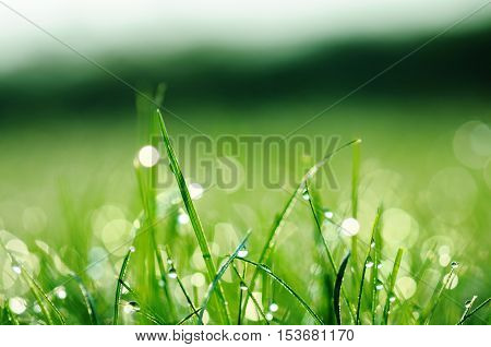 Fresh green grass with water drops on summer day