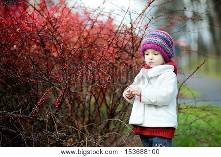 Adorable Toddler In Barberry Bushes On Autumn Day