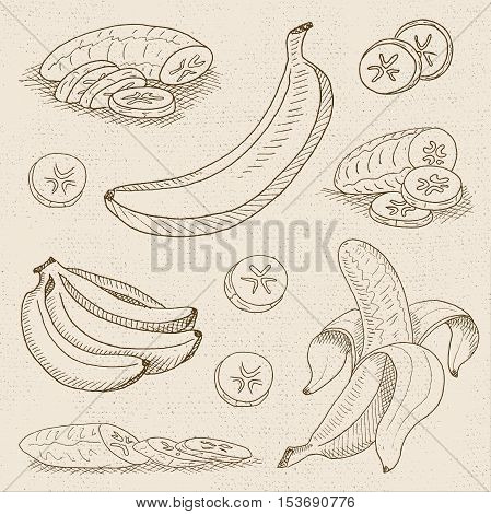 Set of chalk sketch hand drawn, in sketch style, food and spices, old paper textured background. Set with banana peeled, sliced banana, a bunch of bananas. Hand drawn vector illustration.
