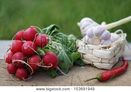 Still life with bunch of radishes chili pepper and garlic with natural light on green blurred background rustic style.