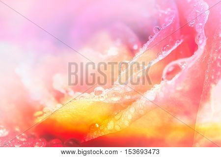 Soft and blur of fantasy pink rose petal with drop