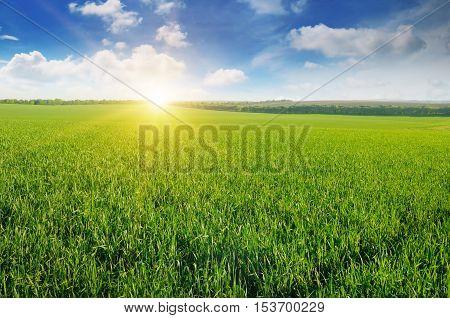 summer field, sun rise and blue sky
