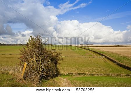 Old Hedgerow And Pasture