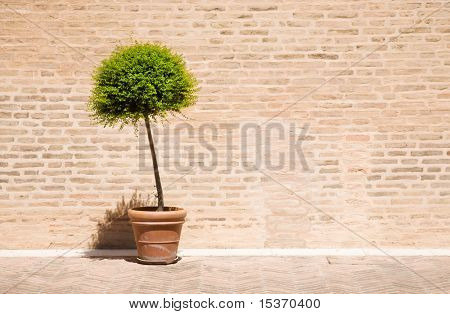 Tree in a flowerpot on brick wall background.