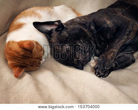 Dog sleeping with cat hugging Cat's paw. Stunning display of feelings in animals