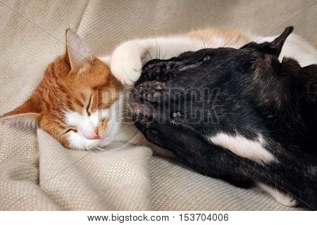 Cat and dog cute lying together on a bed