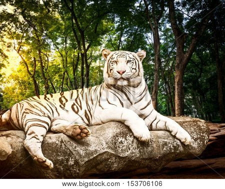 Young white bengal tiger in the act of relax on stone at natural forest