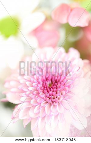 A beautiful bouquet of pink and white flowers with green leaves and a white background in a vertical position.