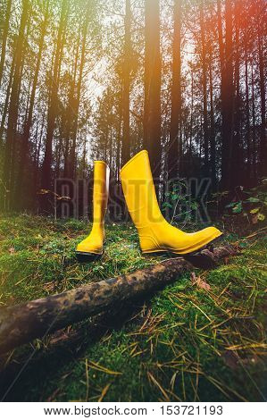 Yellow rubber boots in a Sunny forest lying on the green grass