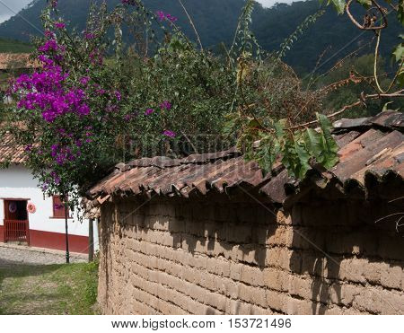 a bush of bougainvilleas reaching over an old clay tile toped adobe brick wall