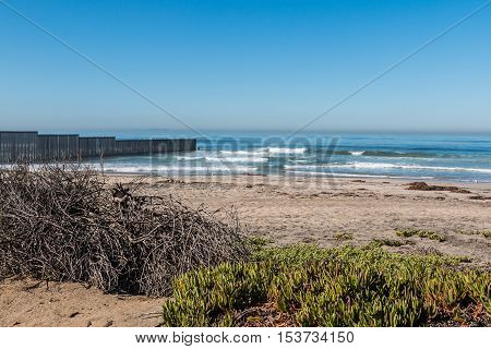 Foliage on Border Field State Park beach with the international border wall separating San Diego, California and Tijuana, Mexico in the distance.